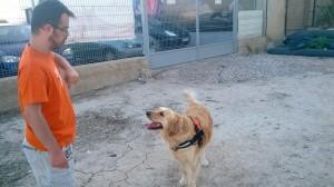 perros de terapia alicante