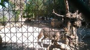Terapia con animales en Alicante