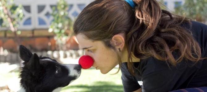 Entrenando a los perros para nuestro programa DOGS & CLOWNS