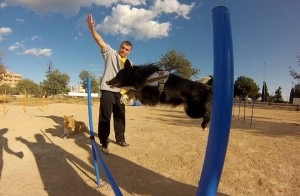 actividad animales y sindrome de down