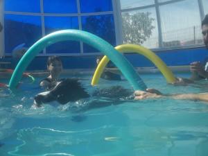 hidroterapia con perros