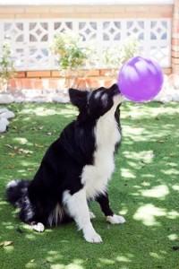 terapia con perros y discapacidad