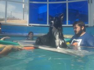 terapia con perros en medio acuatico