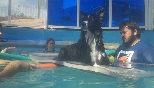 Terapia con perros en piscina