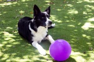 terapia con animales y enfermedades raras