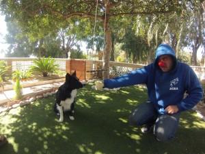 Terapia con animales Alicante