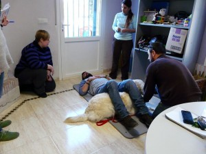 terapia con animales alicante
