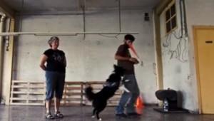 terapia con perros alicante