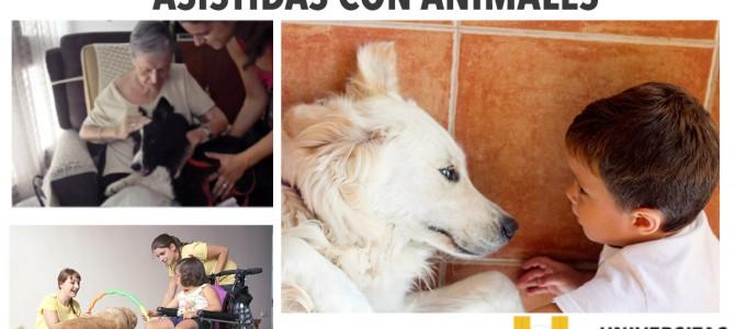 MASTER EN INTERVENCIONES ASISTIDAS CON ANIMALES EN ALICANTE