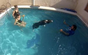 terapia con animales en agua en Alicante