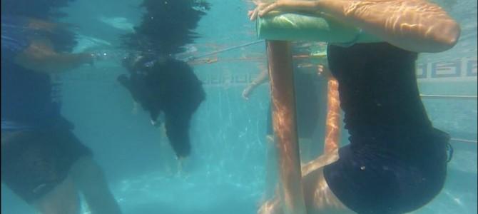 Terapia acuatica con animales Alicante