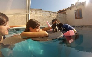 terapia con perros en Alicante