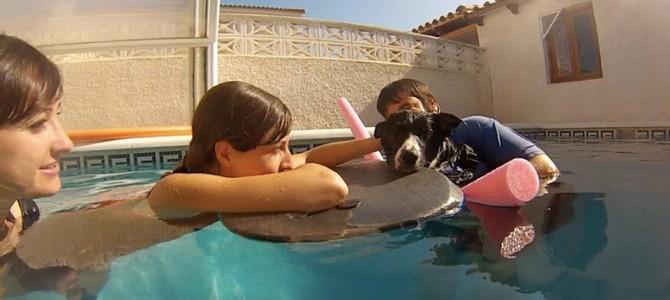 Terapia asistida con animales en agua