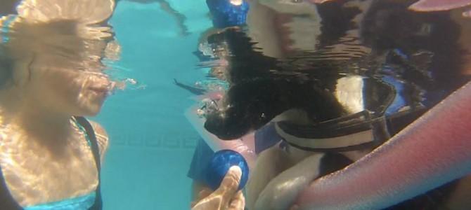Terapia con perros en piscina Alicante