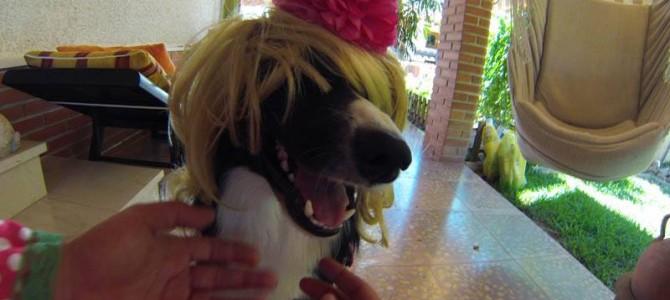 Nueva interacción de terapia asistida con animales en Alicante