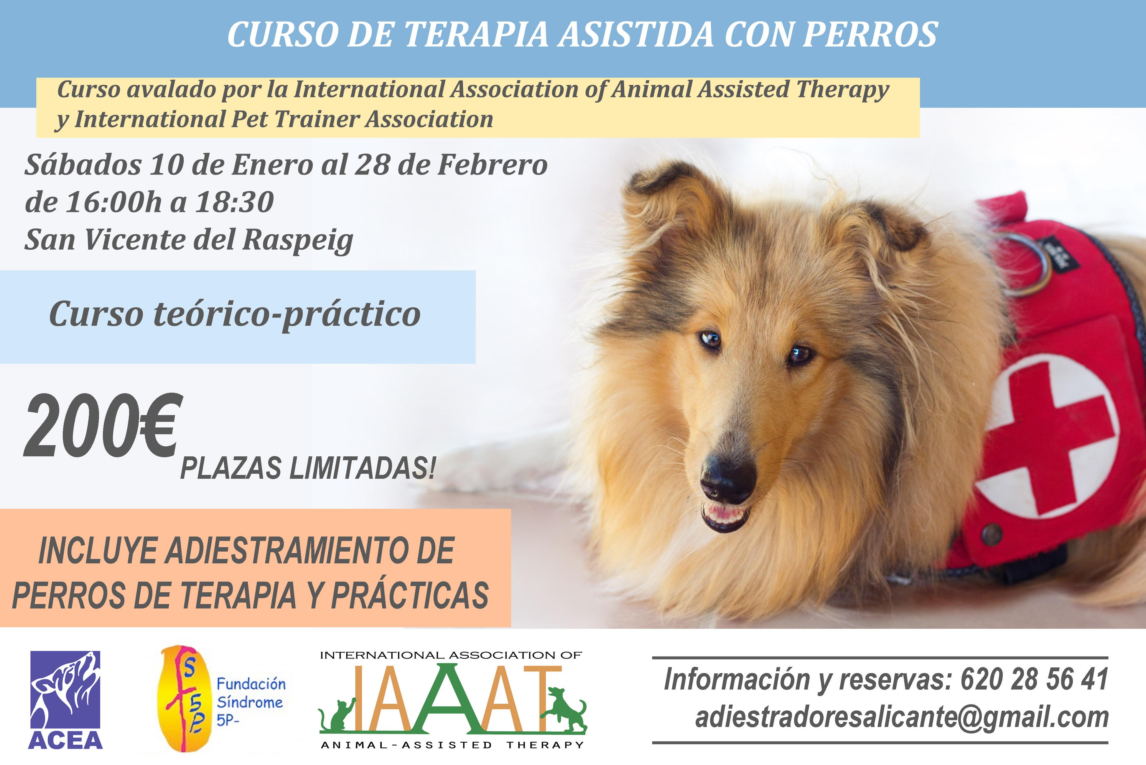 Curso de terapia asistida con perros en Alicante