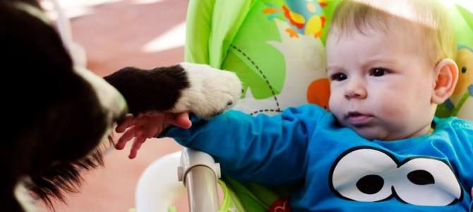 Actividades de atención temprana con perros