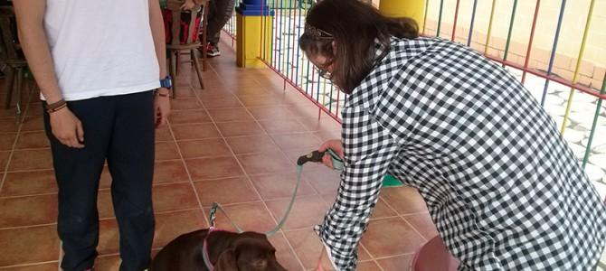 El caso de Sara, o como afrontar la fobia a los perros