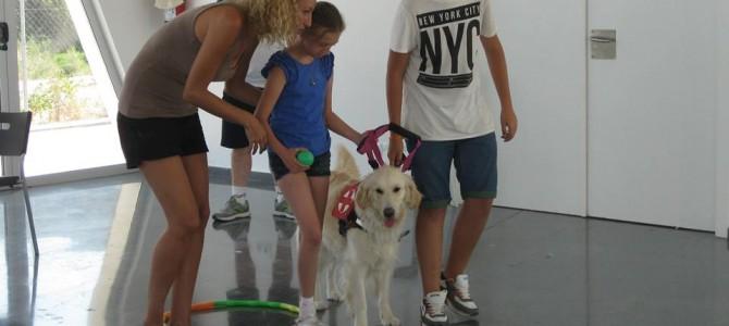Interacción con perros en la Escuela de Verano de Sense Barreres