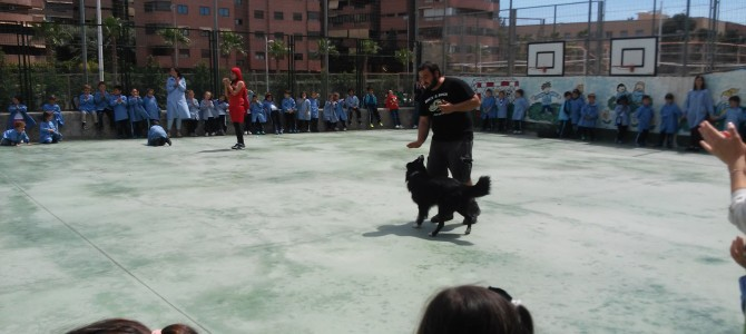 Dogs & Clowns interacción con perros y niños en Alicante