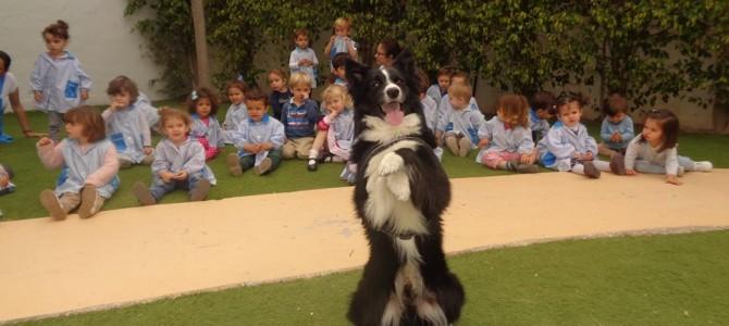 Terapia asistida con perros y atención temprana