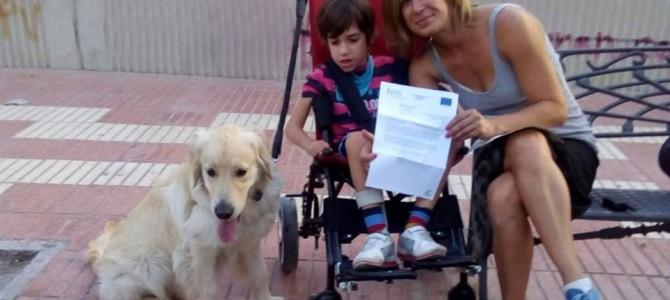 Perros de asistencia en Alicante
